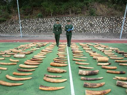 外媒评中国全面实施象牙贸易禁令:送给大象的新年礼物