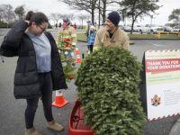回收圣诞树