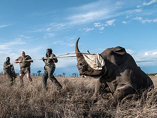 在非洲,遗传学家应用科学手段对付偷猎者