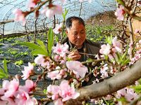河北迁安:设施农业促增收