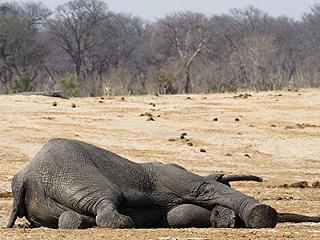 人类战争会导致动物死亡?