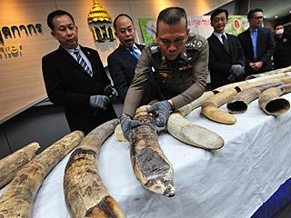 泰国海关破获象牙走私案