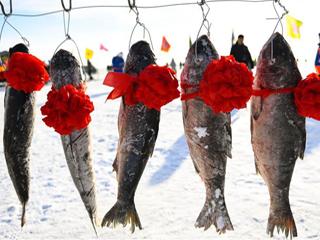 内蒙古草原冬季捕鱼忙