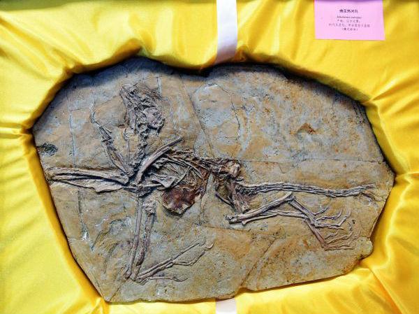 港媒:8块流落欧洲的恐龙和鸟类化石回归中国