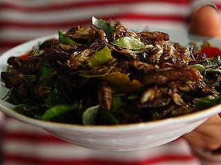 蚂蚁、毛毛虫是什么味道?