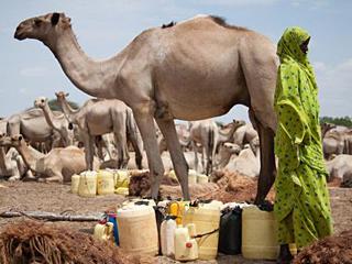 这里的孕妇竟骑骆驼去诊所