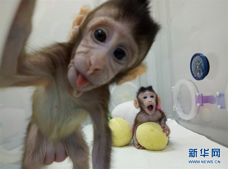世界科学重大突破 克隆猴在中国诞生