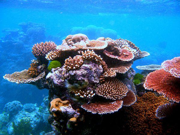 澳门金沙线上娱乐:全球珊瑚礁命悬一线,现在拯救是否为时已晚?