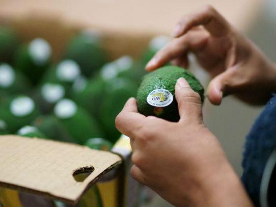 韩媒称中国消费者带热牛油果行情:供不应求价格飙升