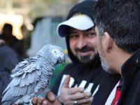 重新热闹起来的巴格达宠物市场