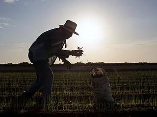 墨西哥农民想赶走美国酒厂