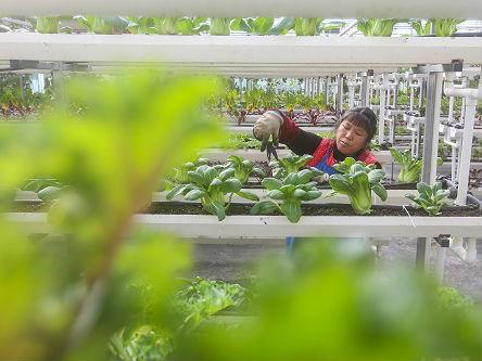 """外媒关注中国发布""""2018年中央一号文件"""":谋求农业现代化"""