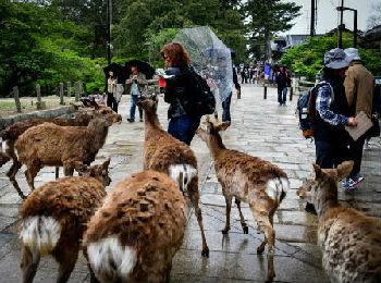 日媒:中国游客助推旅游业成全球经济最大引擎