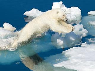 北极温度升高 科学家震惊了