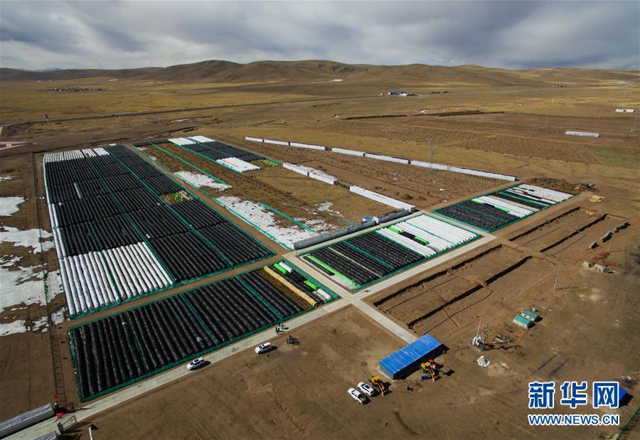 西藏那曲:高寒地区植树试验进展顺利