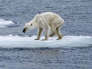 """这样""""暖""""的北极很可怕"""