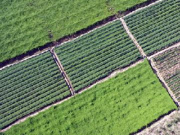 """美媒称中国研究人员创造农业奇迹""""可能会养活地球"""""""