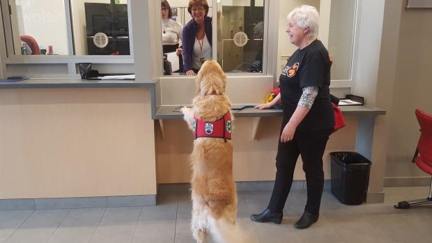 """加拿大这些""""治愈系警犬""""不抓坏人 只负责安抚警察"""