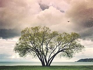 是摄影师毁了世界最美树?