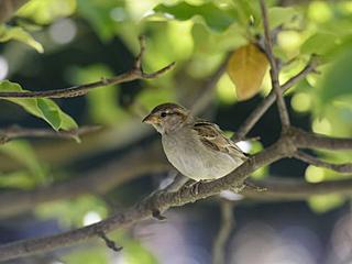 农药导致法国鸟类大幅减少