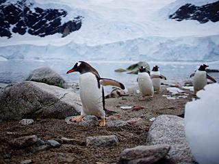独特视角领略充满生机南极