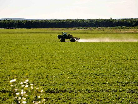 南美大豆生产国紧盯中美贸易摩擦动向 日媒:瞄准中国市场