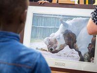纪念:全球最后一头雄性北方白犀牛离世