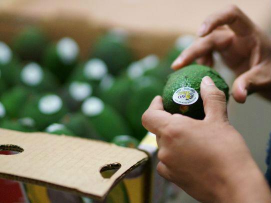 """美媒称牛油果成全球贸易""""绿色黄金"""" 生产商瞄准中国市场"""