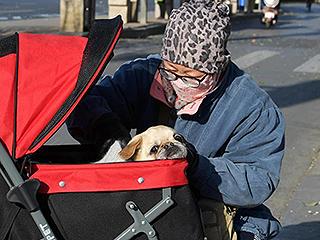 小狗坐婴儿车御寒