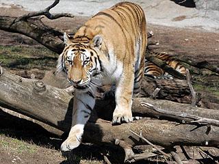 美动物园处理动物粪有妙招