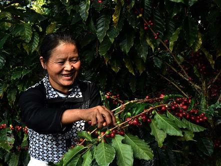 美媒称中国千禧一代口味转变 咖啡成茶叶之乡新风味