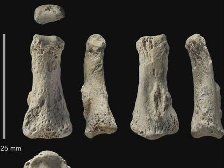 美媒:阿拉伯沙漠发现8.5万年前人类指骨化石