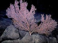 """西太平洋的""""海底花园"""""""