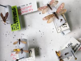 还原2亿年前昆虫真实颜色