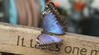 伦敦举行奇异蝴蝶展