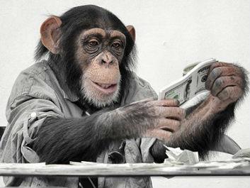 """英媒:研究称猴子像人一样也会""""理财"""""""