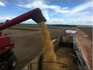 """英媒:美国对华出口大豆交易""""急冻"""" 中国买家抢购巴西大豆"""