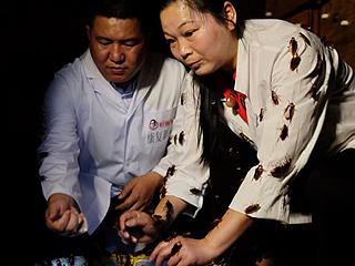 """外媒记者探访中国蟑螂养殖基地:""""吓死我了!"""""""