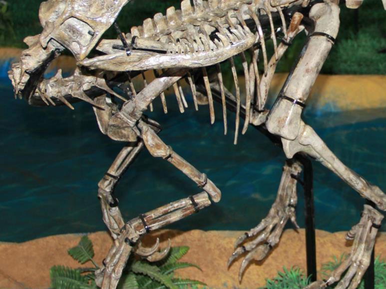 山东发现小型兽脚类恐龙