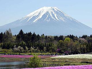 日本富士山下芝樱绽放