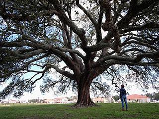 """这些树简直""""逆天"""",30个人都抱不过来"""