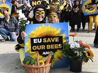 """蜜蜂若消失,人类将灭亡?欧盟立法:""""拯救蜜蜂""""首战告捷"""