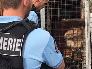 钥匙丢了 野猴被笼中15年