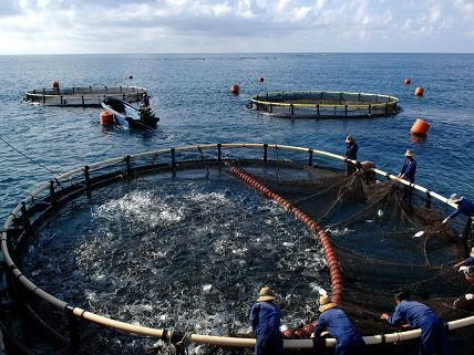 外媒:中国鱼类产品占领非洲市场 罗非鱼最受欢迎
