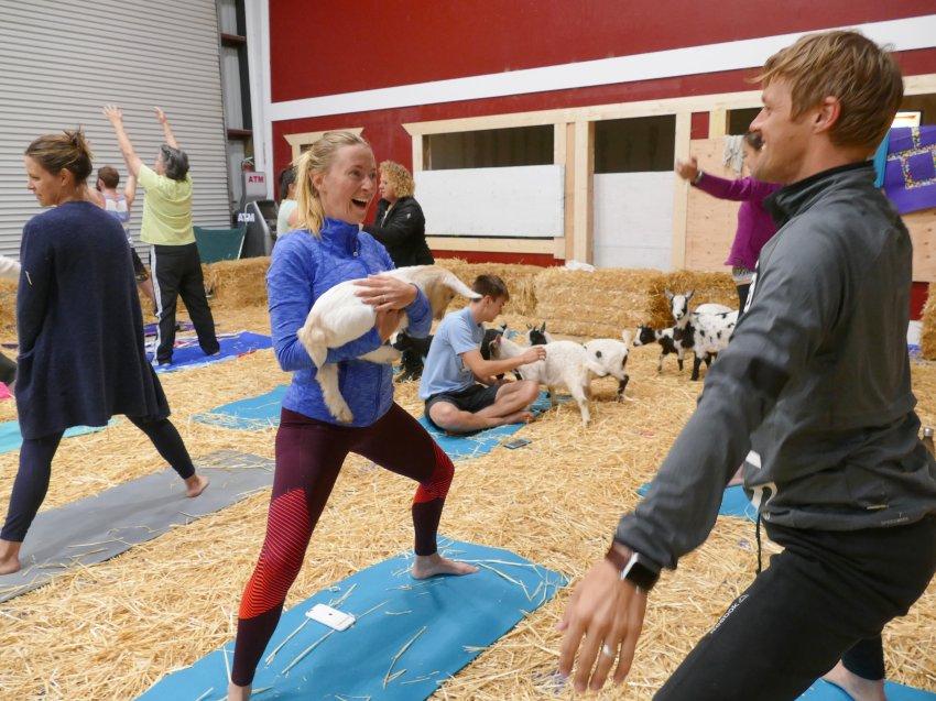 他们居然和山羊一起练瑜伽 有人认为这不新鲜