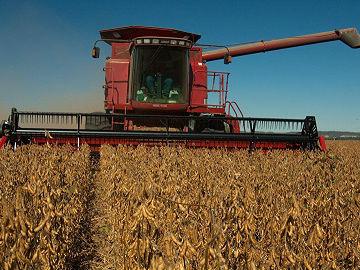 中国放弃美国大豆寻找新市场?俄媒:俄远东地区正合适!