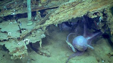 大开眼界!科学家探秘墨西哥湾深海:仿佛置身外星世界