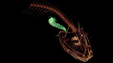 盘点2017年发现的10种奇特新物种:有些已灭绝
