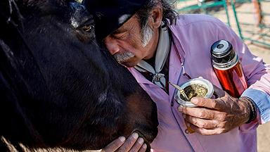 """""""马语者""""通过马给人治疗情绪疾病 一次治疗近千元"""