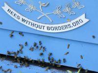 """联合国举行活动庆祝首个""""世界蜜蜂日"""""""